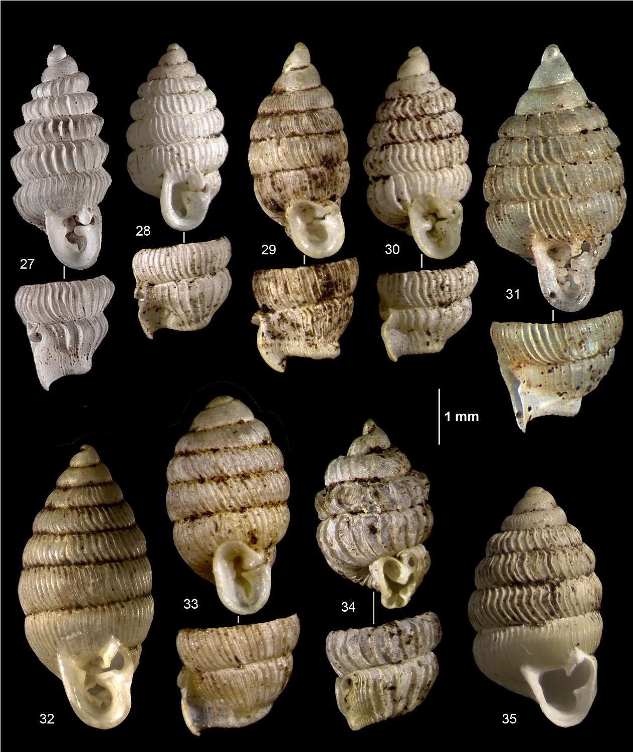 figure 27-35