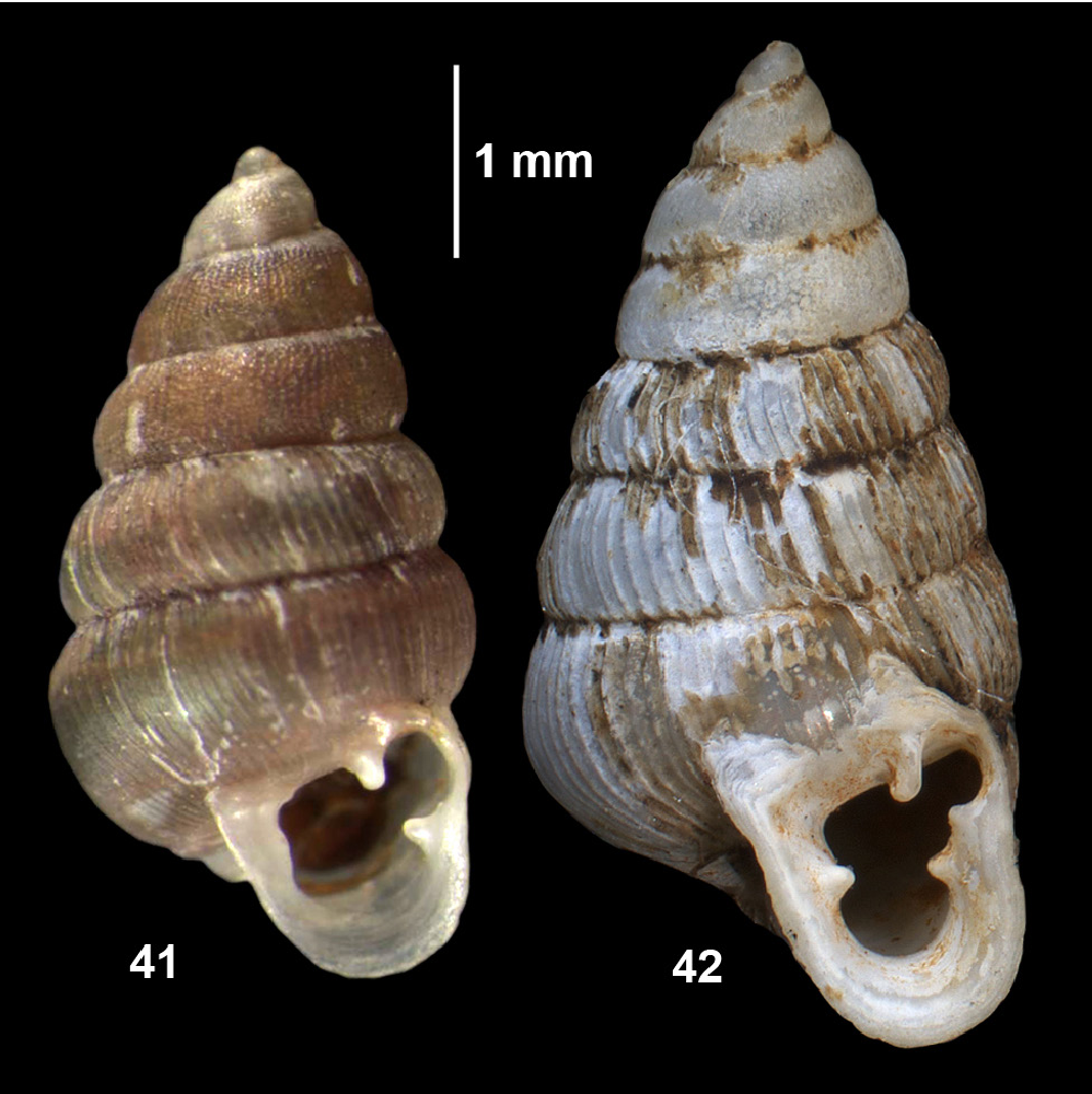 figure 41-42