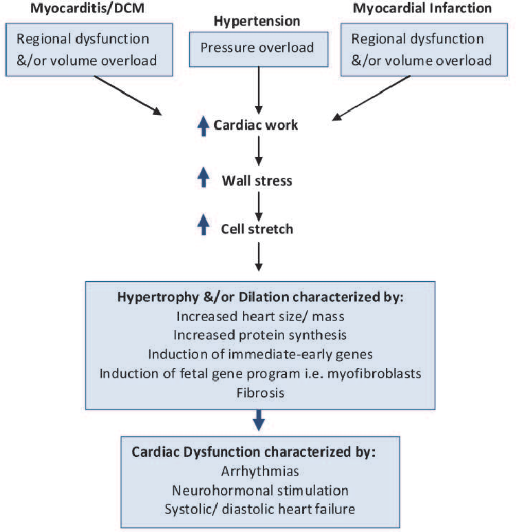 Figure 1 from Nonmodifiable risk factors Potentially