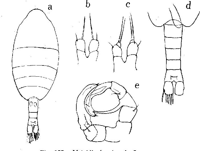 figure 157