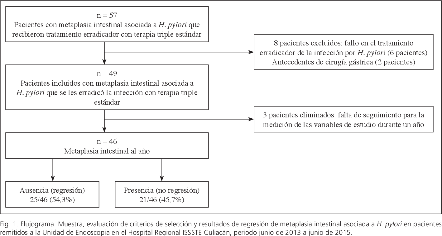 La metaplasia intestinal se cura