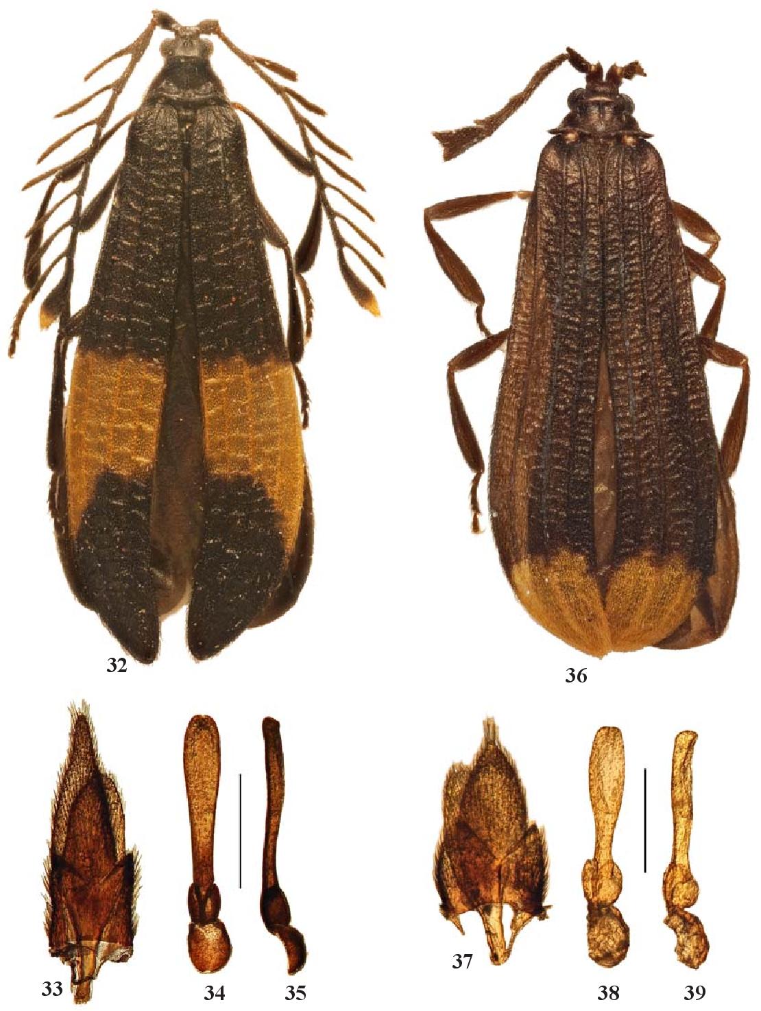 figure 32–39