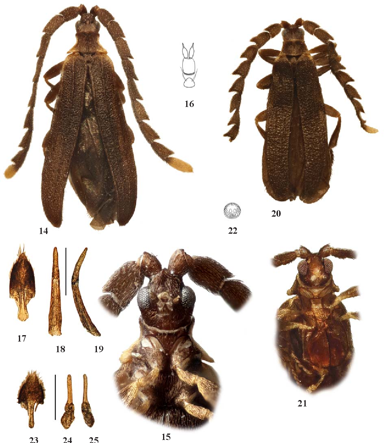 figure 14–25