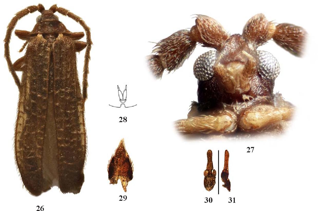 figure 26–31