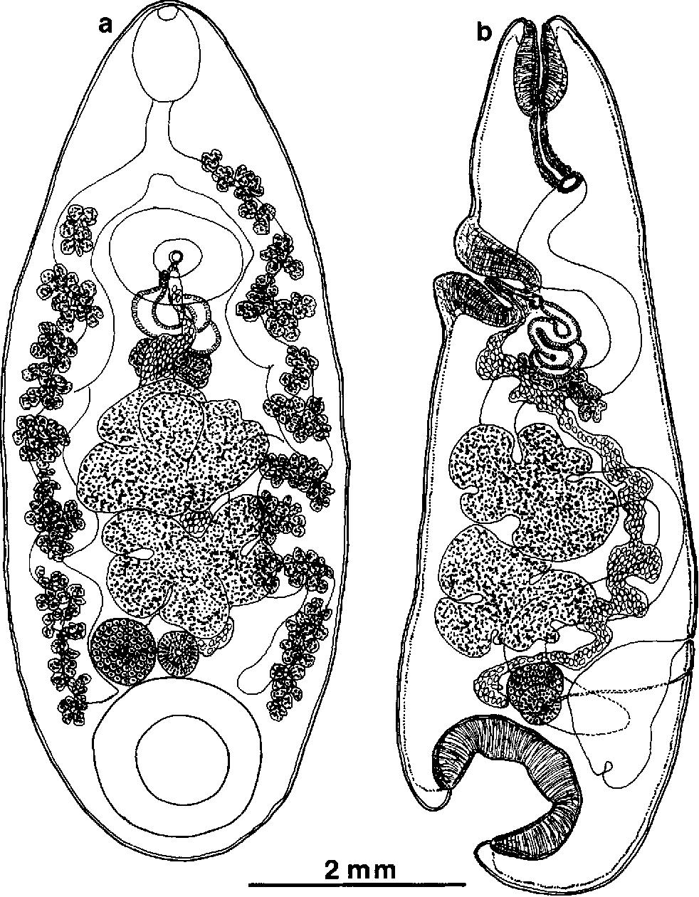 figure 126
