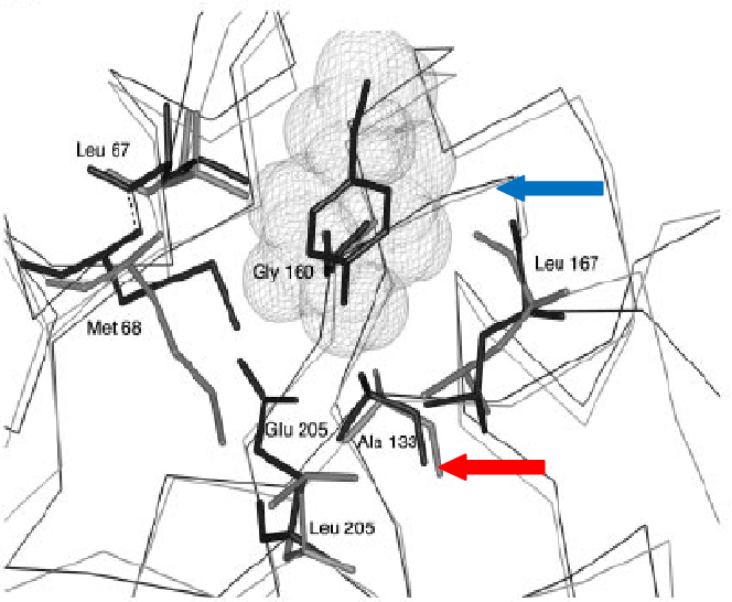 Enzymatic and crystallisation studies of CATL-like trypanosomal ...