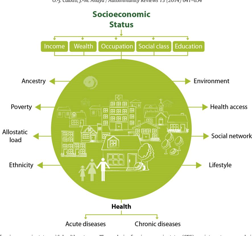 Education, Social Status, and Health