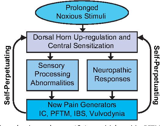 Pathophysiology Of Pelvic Floor Hypertonic Disorders