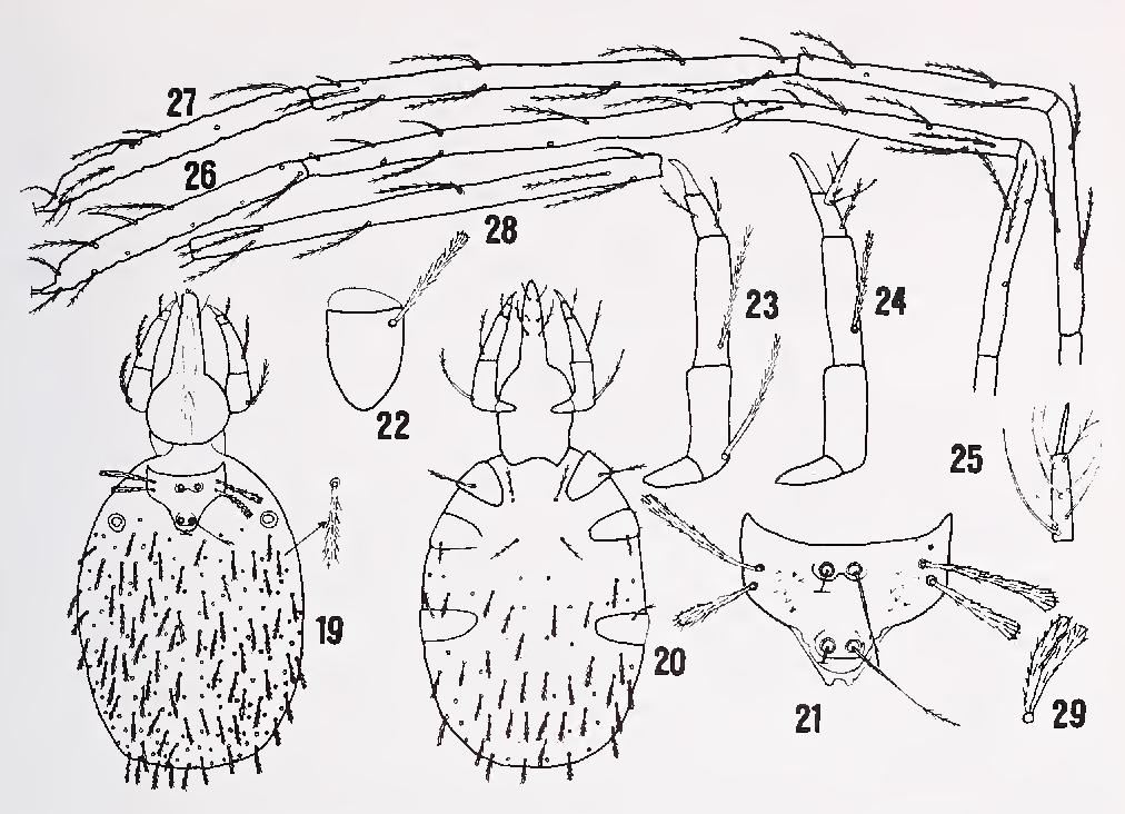figure 19—29