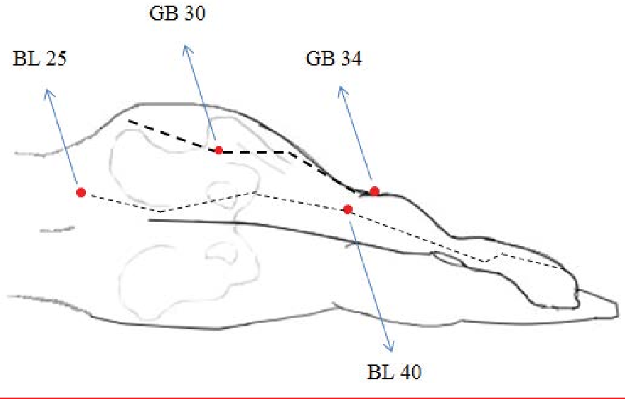 Figure 2 from Therapeutic Approach of Acupuncture for
