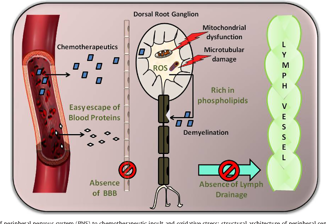 Figure 2 from Oxidative stress and nerve damage: Role in