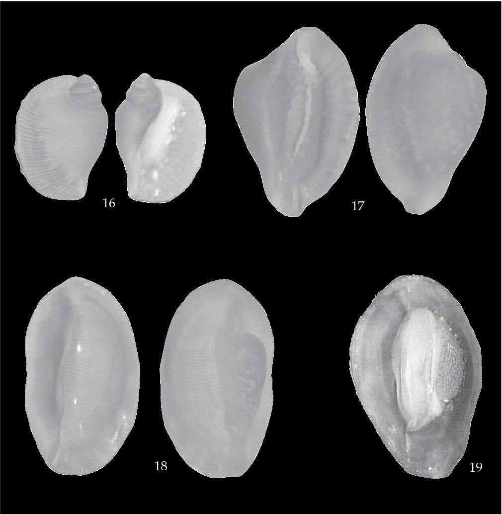 figure 16-19