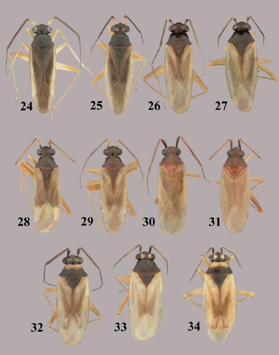 figure 24–34