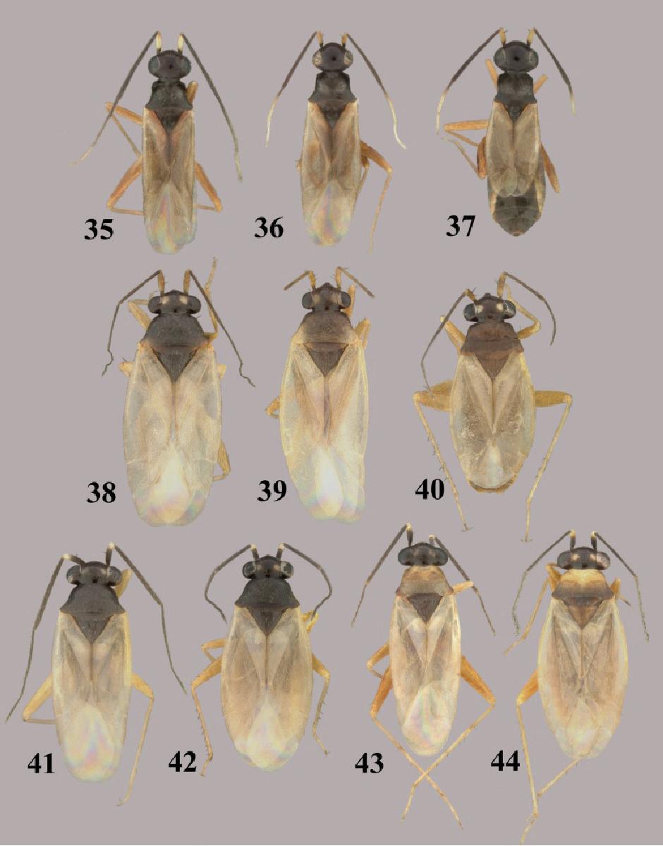 figure 35–44