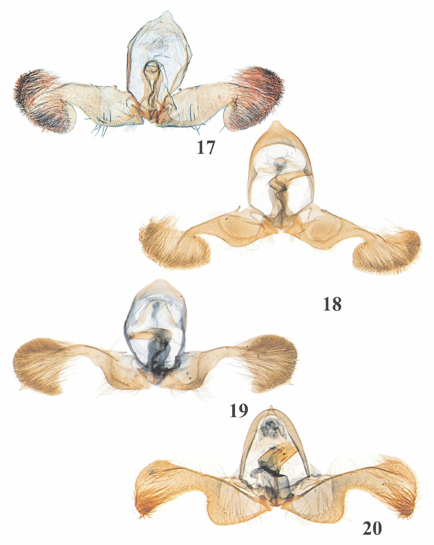 figure 17-20