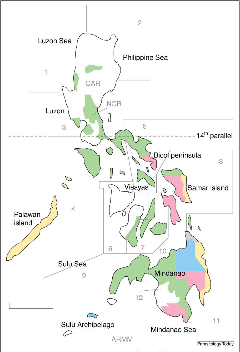 Fig. 1. A map of the Philippines indicating the distribution of filariasis and regions specific for Brugia malayi (blue), Wuchereria bancrofti (pink), both (yellow) or undefined (green) species. Numbers refer to public health Regions defined in Table 1. Scale bar 5 200 km. Abbreviations: ARMM, Autonomous Region of Muslim Mindanao; CAR, Cordillera administrative region; NCR, Metropolitan Manila.