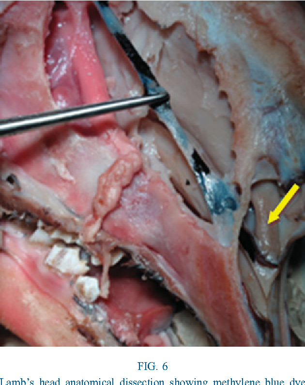 An animal model for endoscopic endonasal surgery and