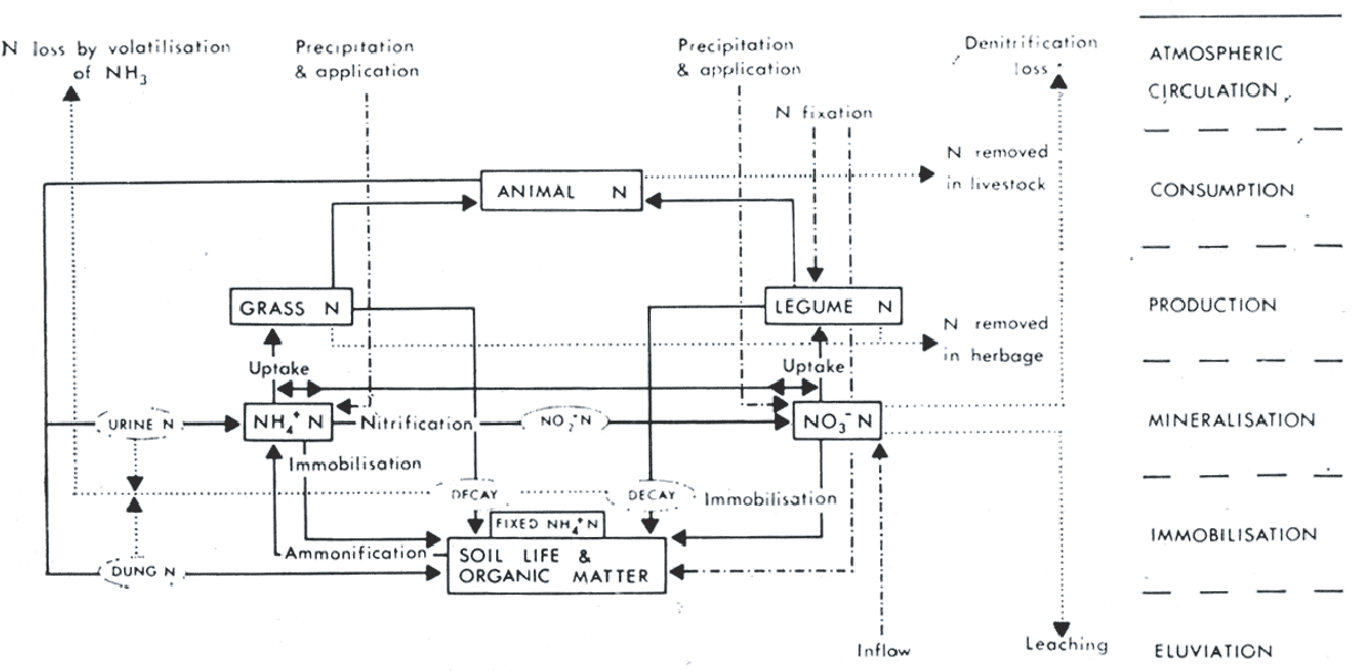 Figure 6 from MODELS AND PROCESSES OF THE NITROGEN CYCLE The ... on diagram of autotroph, diagram of citric acid cycle, diagram of air pollution, diagram of auditory system, diagram of nutrition, carbon cycle, diagram of grasslands, diagram of life cycle, diagram of oxygen cycle, diagram of land use, diagram of krebs cycle, diagram of phosphorus cycle, diagram of sediment, diagram of community, diagram sulfur cycle, diagram of translation process, diagram of organism, diagram of nitrogen cell, diagram of mutation, diagram of scientific process,