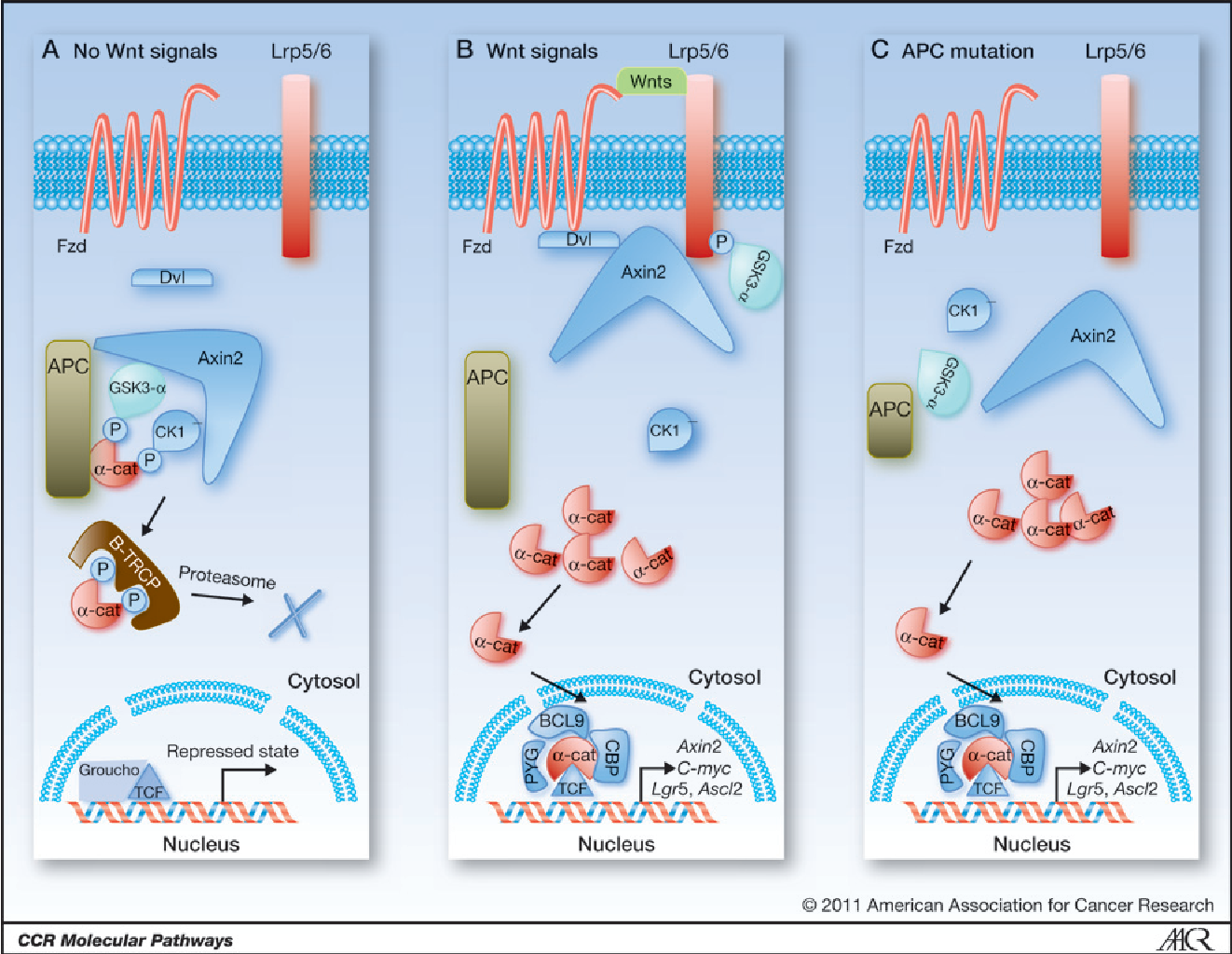 Figure 1 From Molecular Pathways Targeting Wnt Signaling In Colon Cancer Stem Cells Semantic Scholar
