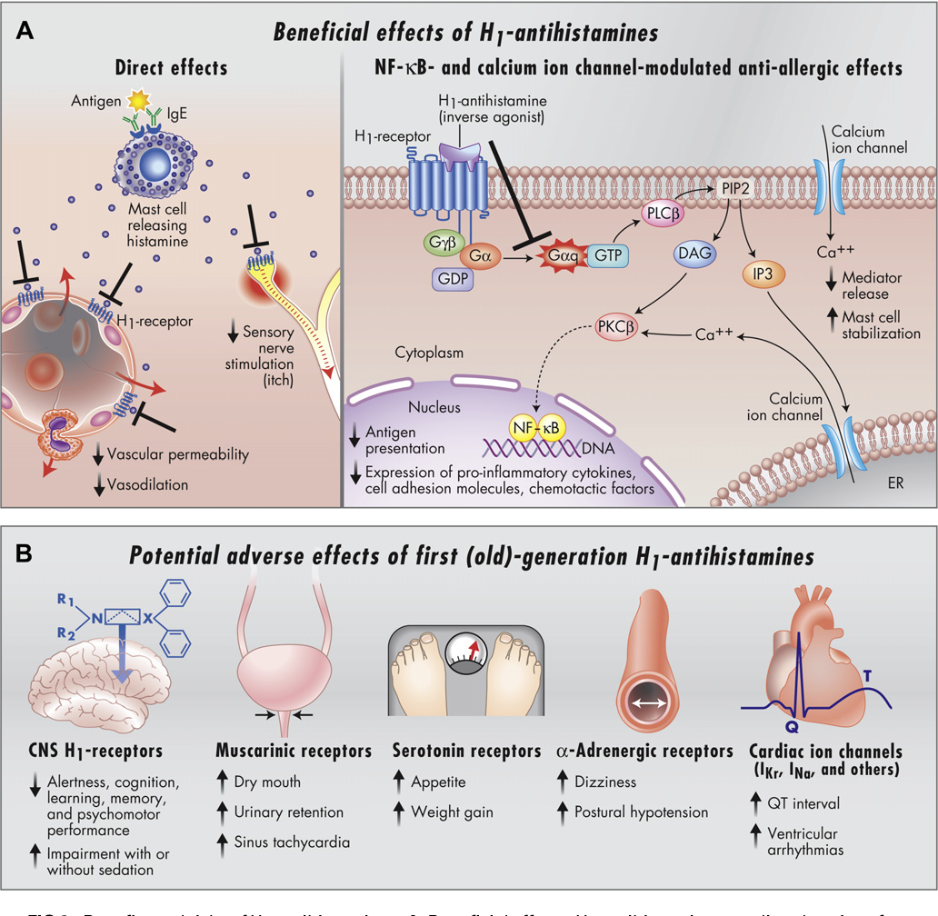 Figure 3 from Histamine and H1-antihistamines: celebrating a