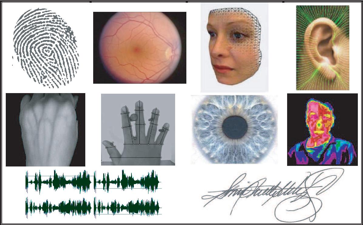 Figure 1 2 from T́ıtulo : Biometric Security : HillClimbing