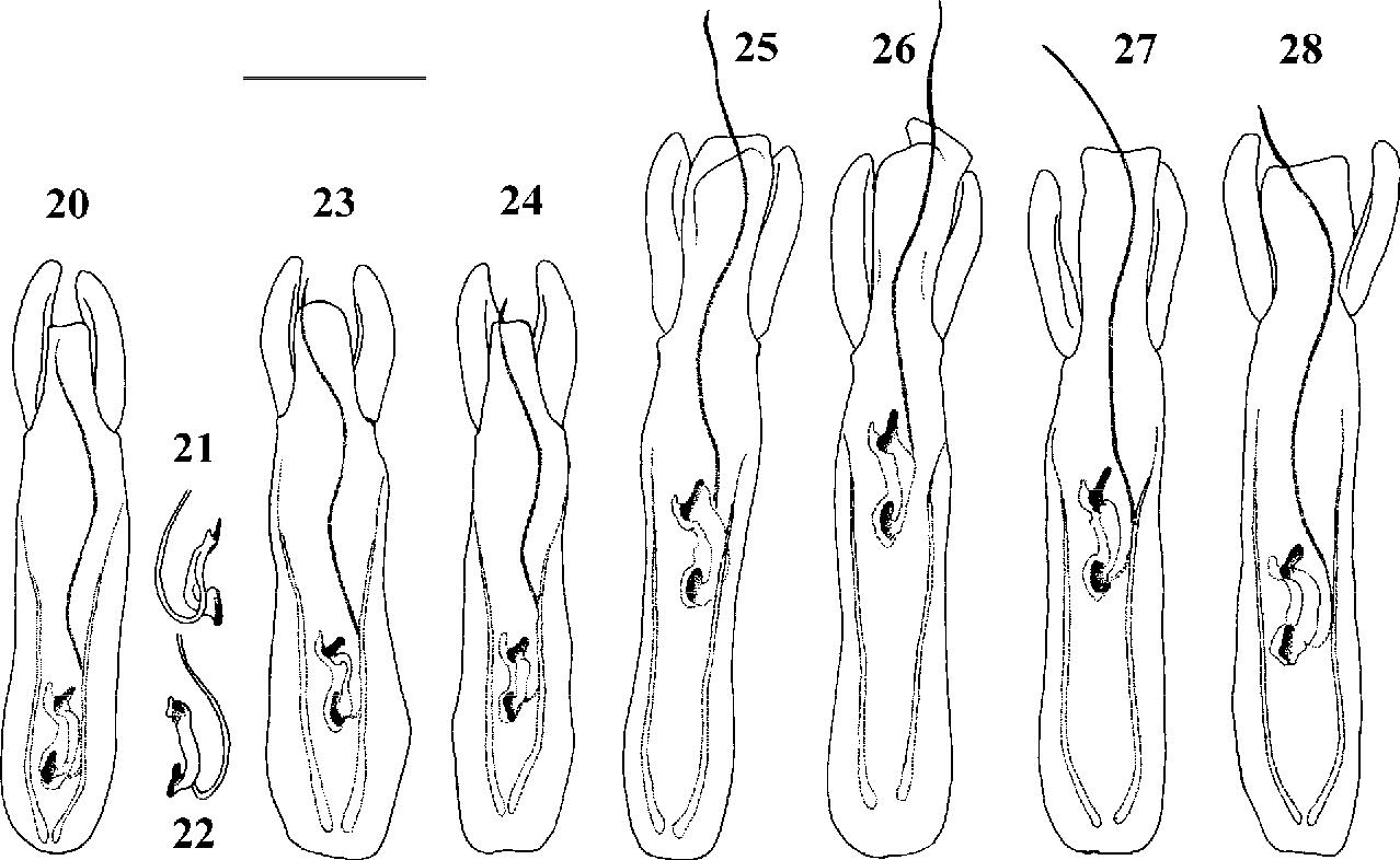 figure 20–28