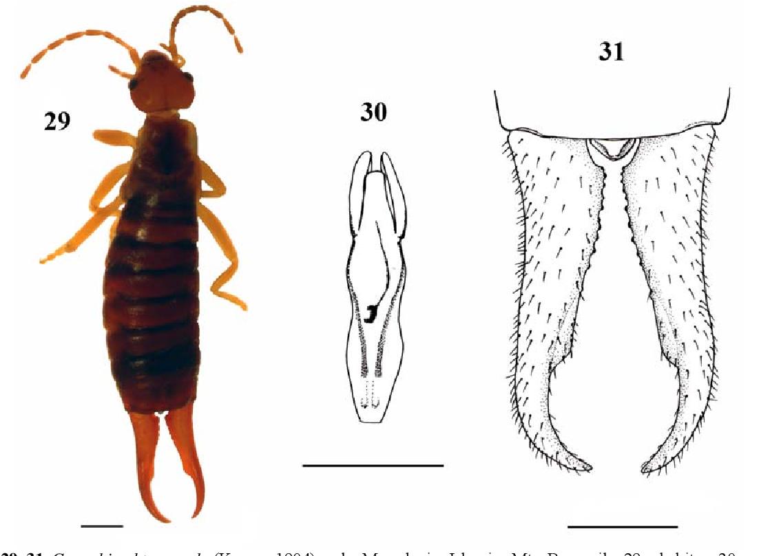figure 29–31