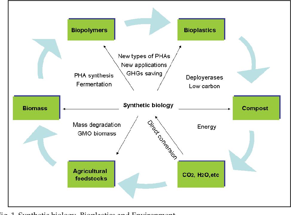 PDF] Conversion of Biomass into Bioplastics and Their