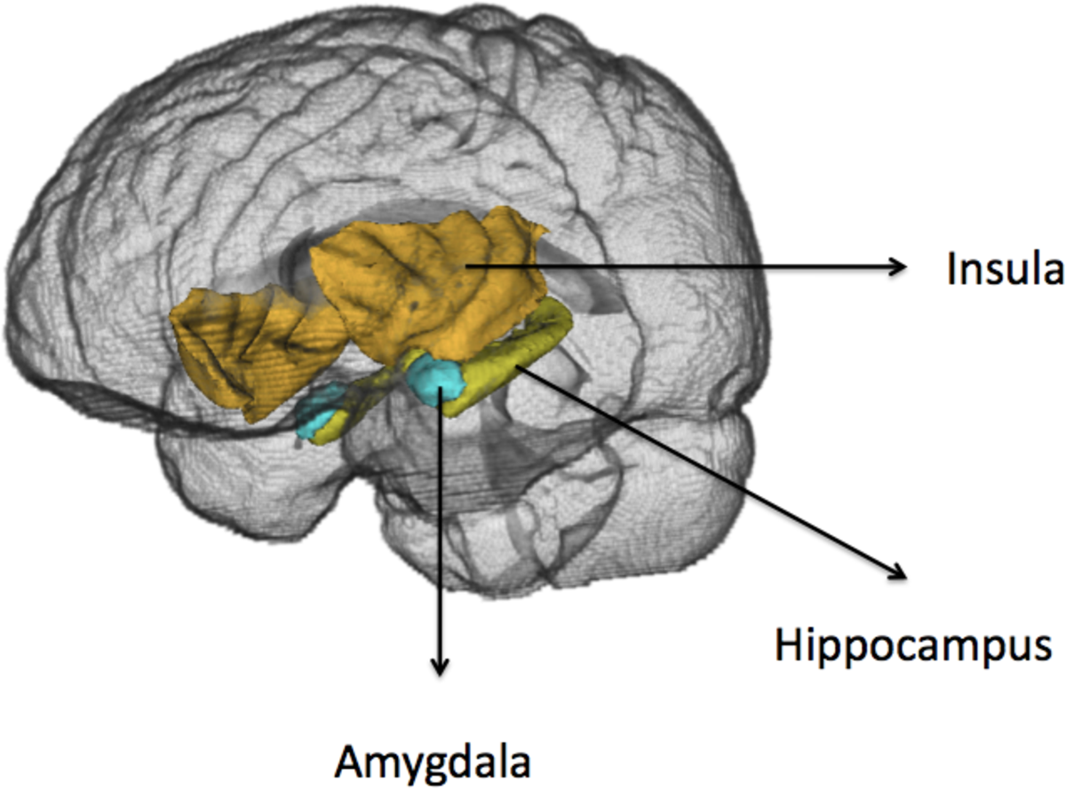 Figure 3 from THE FATE OF EMOTION-RELATED BRAIN REGIONS ...