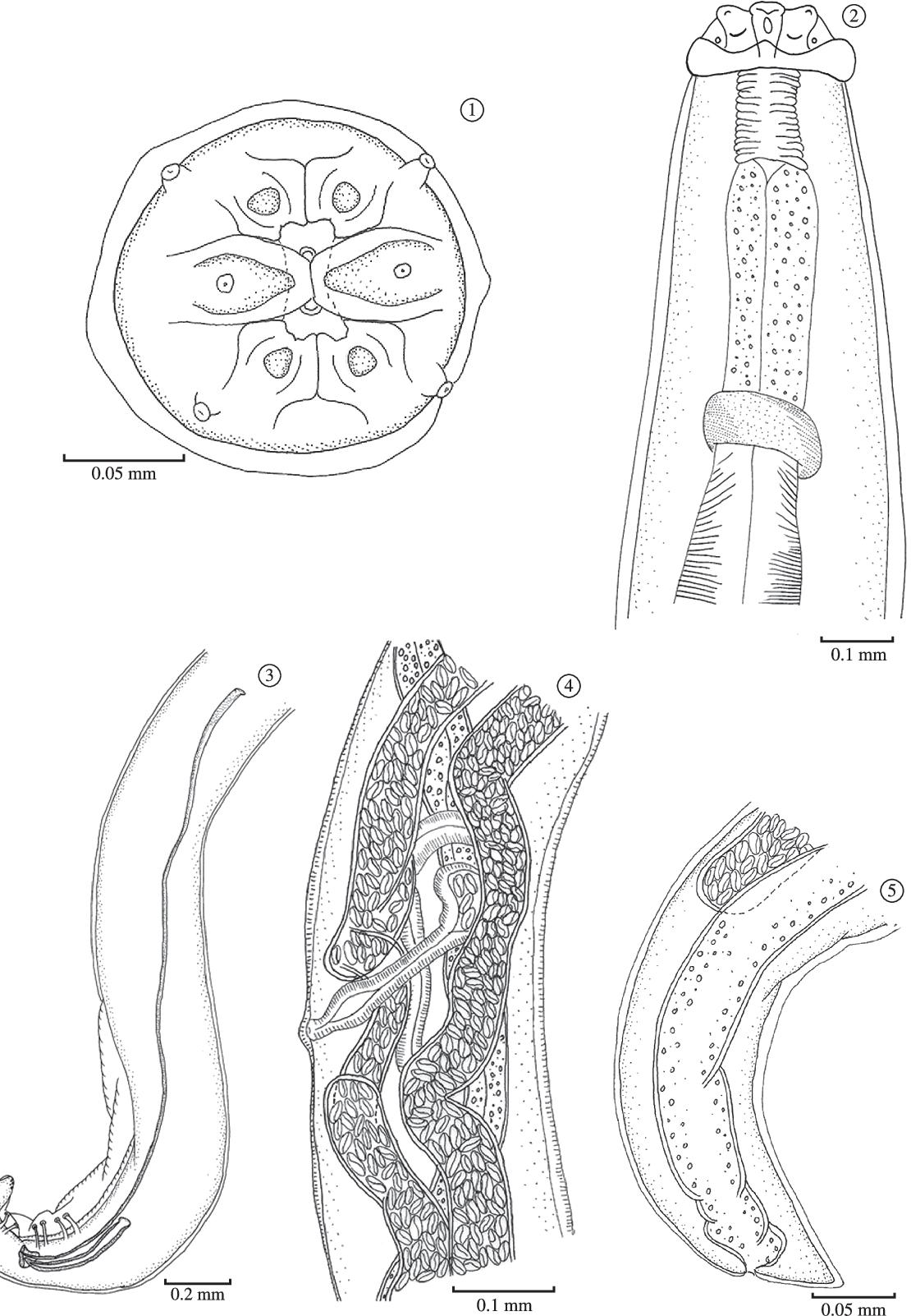 figure 1‑5