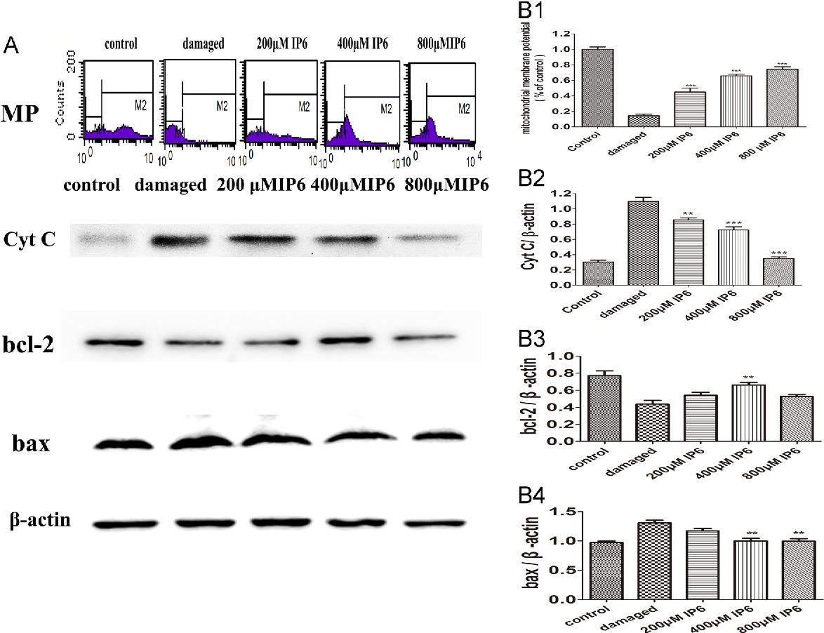 Neuroprotection of inositol hexaphosphate and changes of
