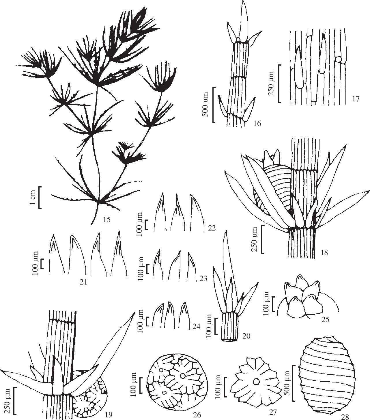 figure 15-28