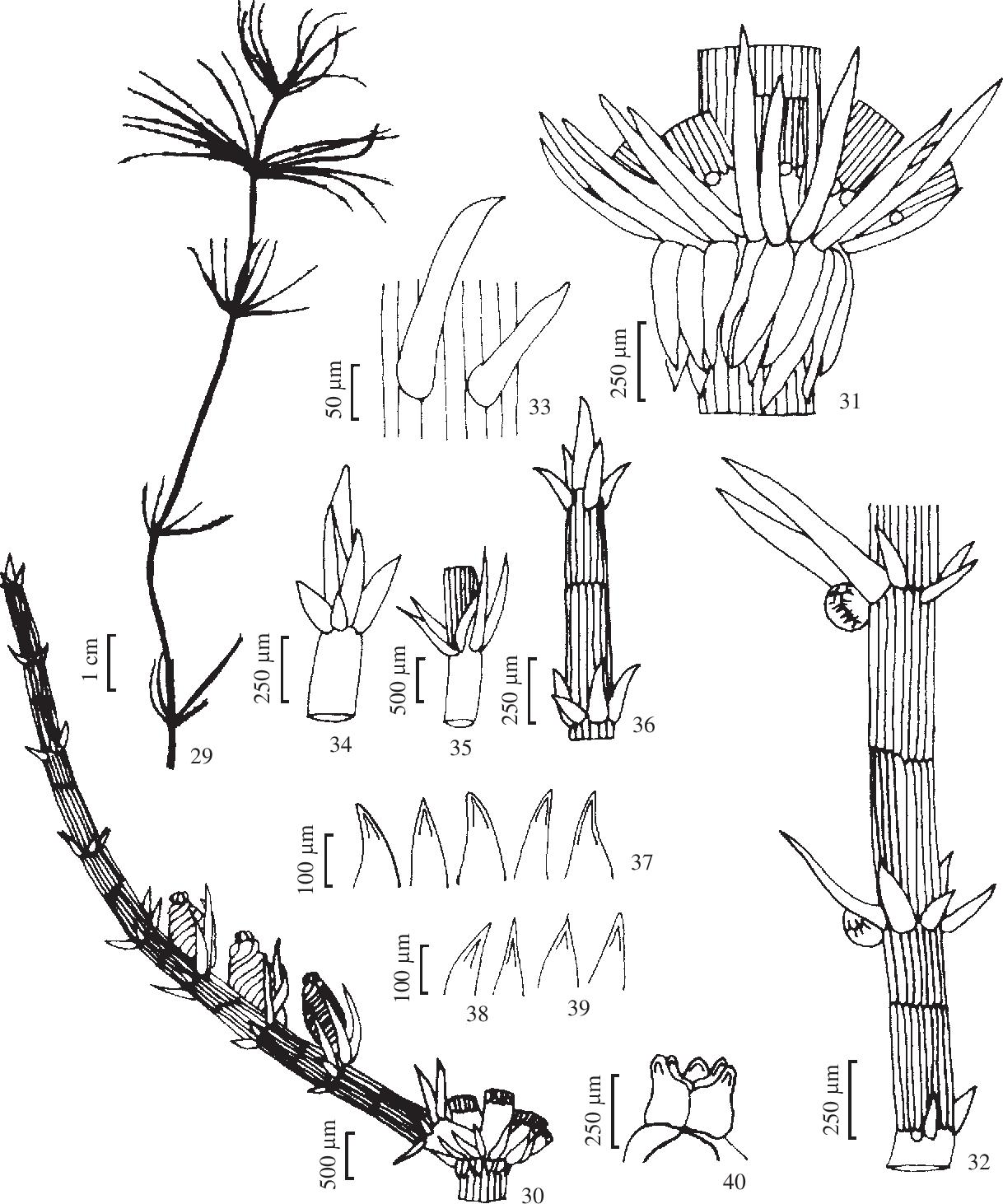 figure 29-40