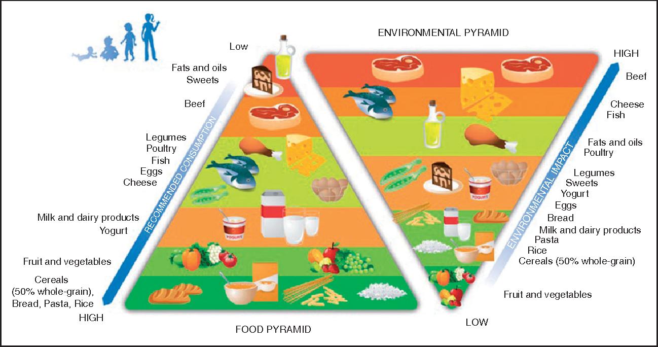 The Double Pyramid غذاهای سالم و پایدار ـ غذاهای گیاهی که به سیاره زمین آسیب میزنند!  هرم غذایی