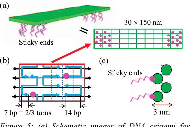 Origami DNA | STEM | 426x636
