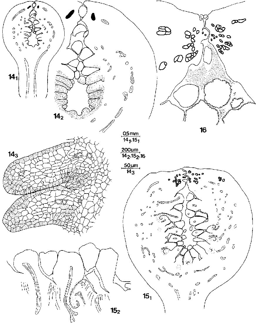 figure 151