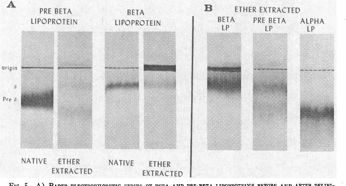 Figure 5 from The nature of pre beta (very low density