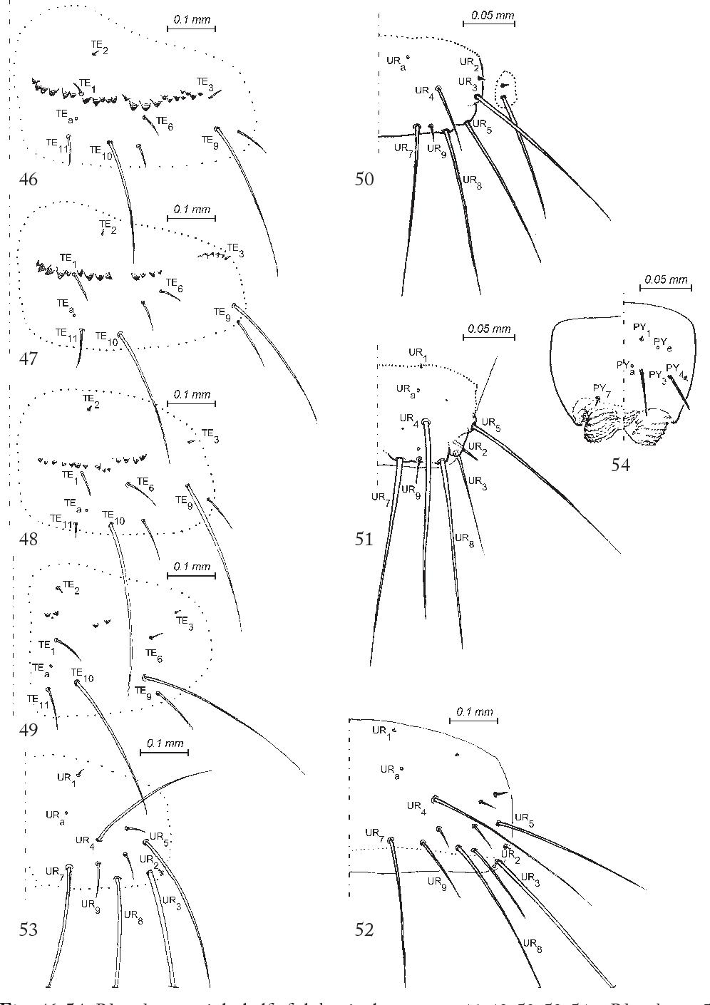 figure 46-54