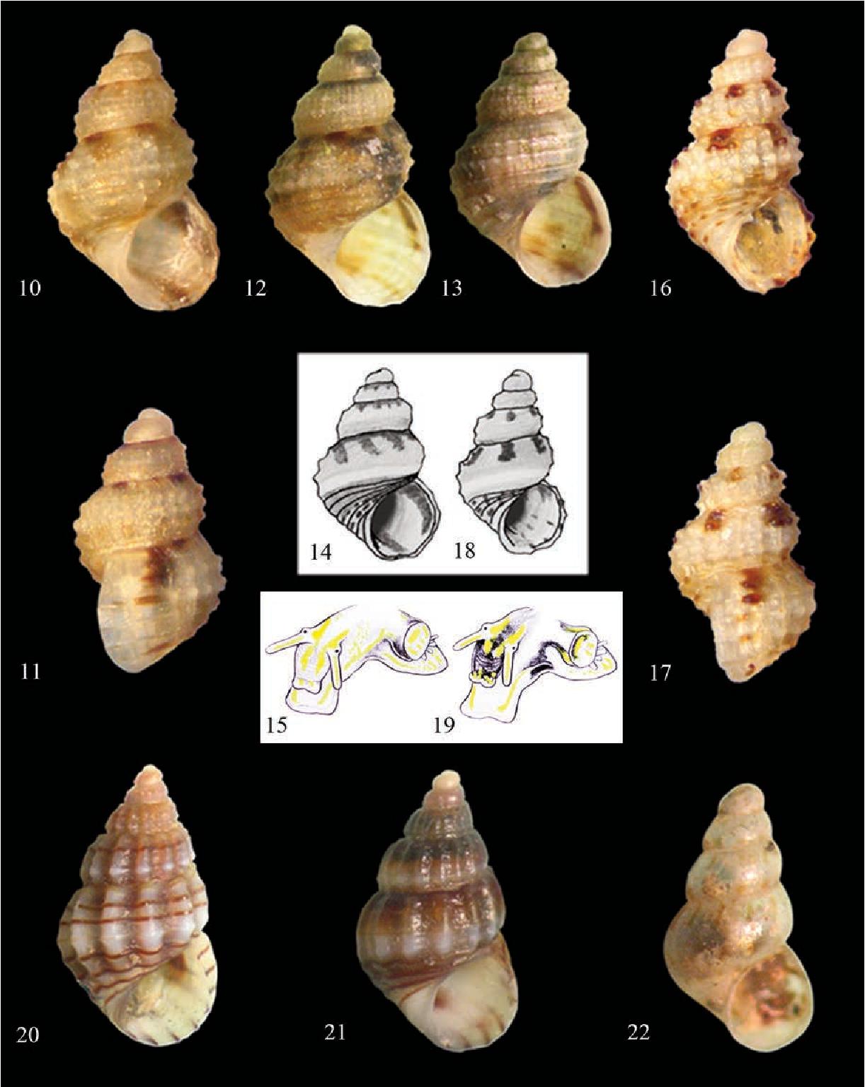 figure 10–15