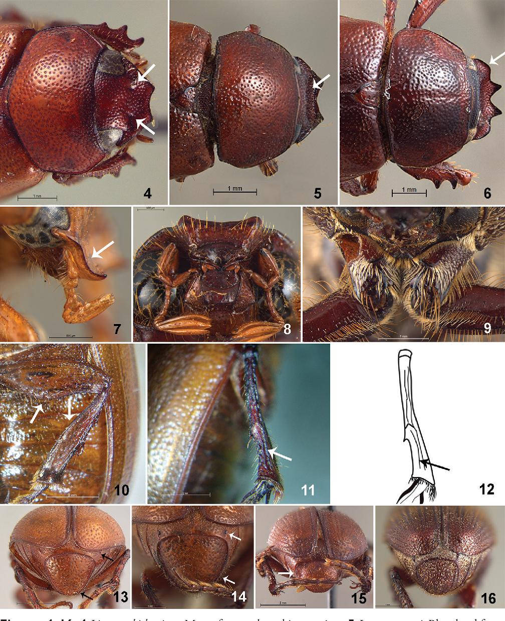 figure 4–16