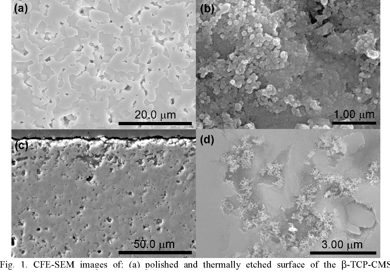 Figure 1 from Bone-Like Apatite-Forming Ability of Ca3(PO4)2
