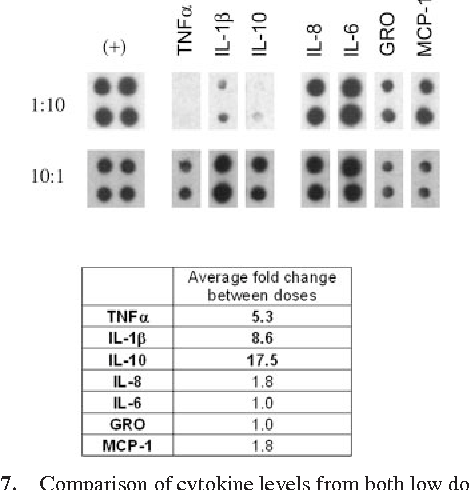 FIGURE 7. Comparison of cytokine levels from both low dose and positive control inoculations during one experiment. Primary human monocytes were challenged for 18 h with killed N. gonorrhoeae, strain F62 lgtD. Monocytes were challenged with an MOI of either 10 or 0.1. Densitometric analysis was conducted using a Gel Doc 2000 camera and Quantity One Software (Bio-Rad). Internal positive controls were compared among array exposures and the means were found to be statistically similar (p 0.7548 according to a paired, two-tailed t test) before crosscomparison of sample cytokine levels. A fold change greater than or equal to 2-fold was determined to be significant. Table values represent an average of two independent array experiments.