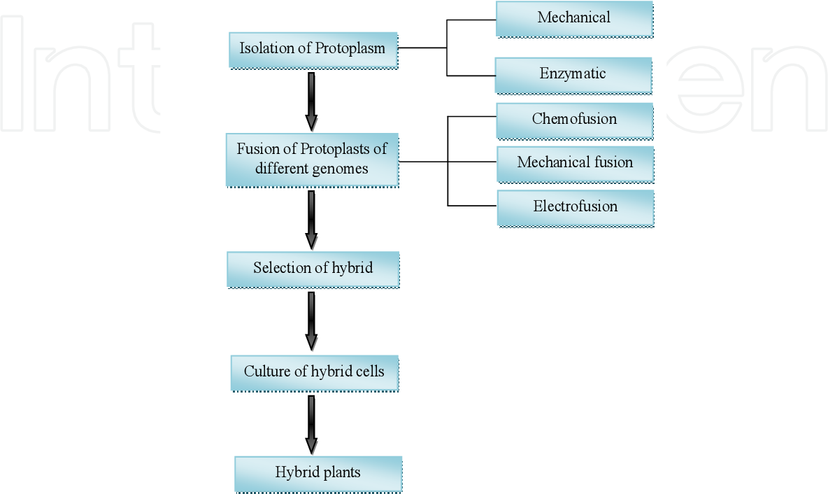 Pdf Plant Tissue Culture Current Status And Opportunities