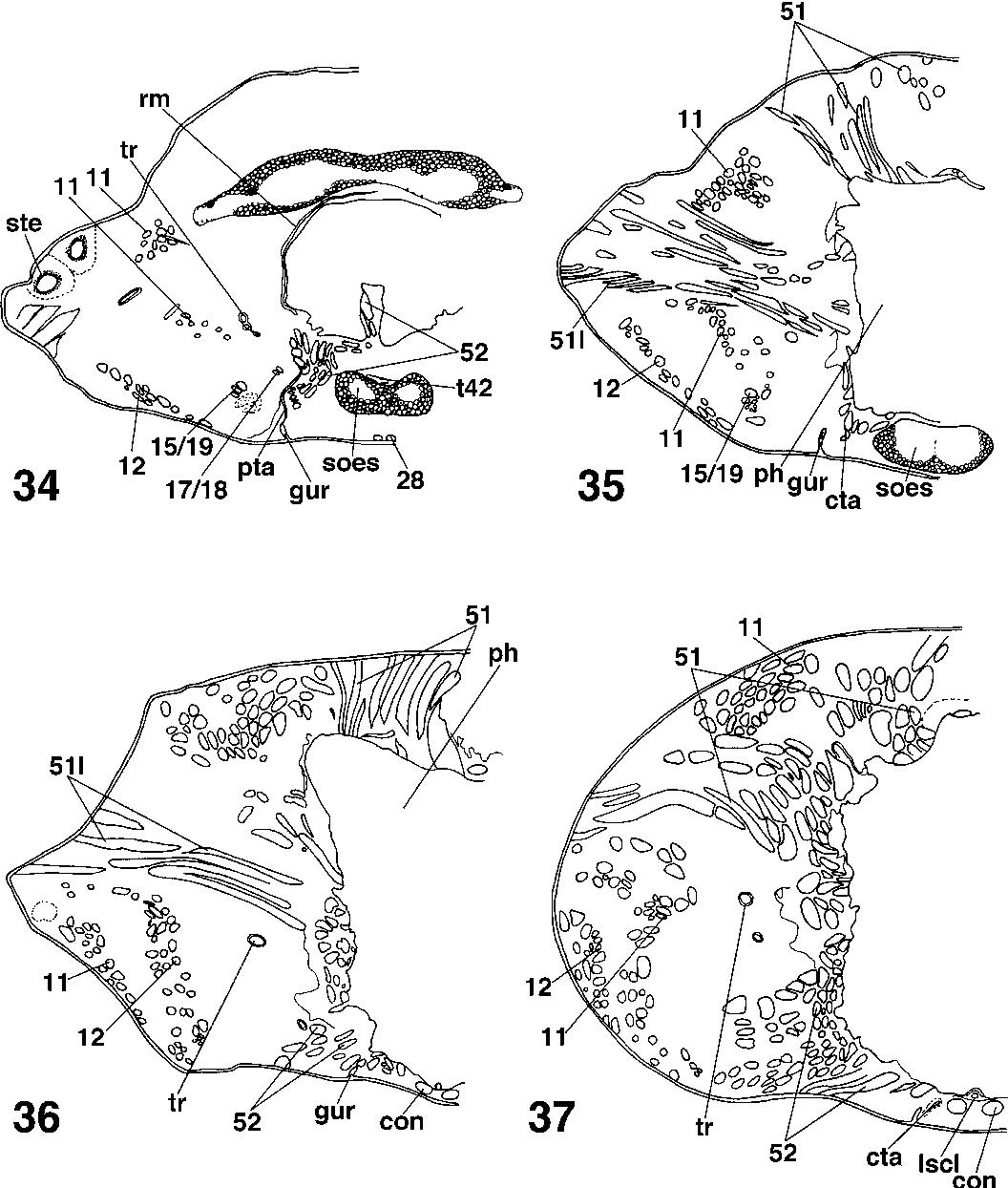 figure 34–37