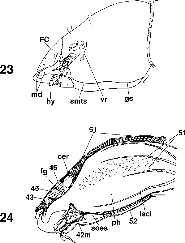 figure 23–24