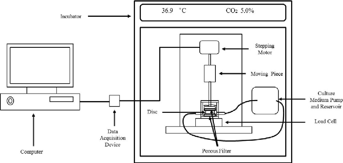 Mechanobiology of the Intervertebral Disc: Influences of Static ...