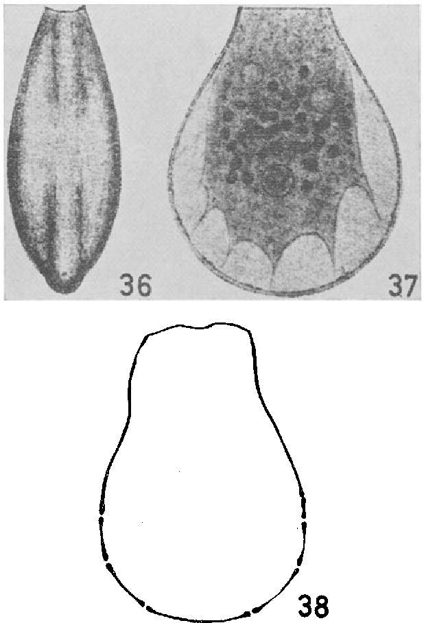 figure 36-38