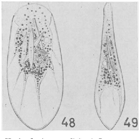 figure 48-49