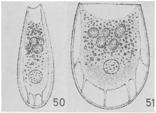 figure 50-51