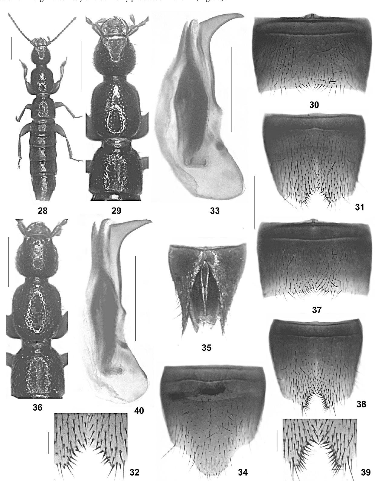 figure 28-40